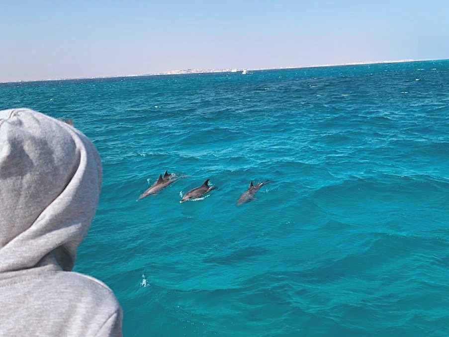 Boy looking at Dolphins swimming in the Red Sea in holidays to hurghada